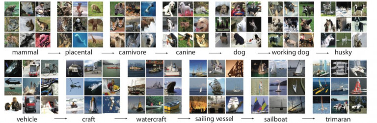 Deux branches de la structure d'ImageNet. Deng, Jia, Wei Dong, Richard Socher, Lia-Jia Li, Kai Li et Li Fei-Fei. 2009. « ImageNet: A large-scale hierarchical image database ». In 2009 IEEE Conference on Computer Vision and Pattern Recognition, 248-55. Miami, FL: IEEE. https://doi.org/10.1109/CVPR.2009.5206848.